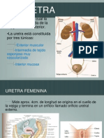 Urinario 4