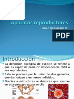 An y Fis Del Sistema Re Product Or