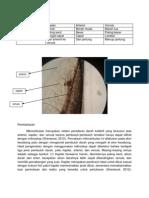 mikrosirkulasi cebong