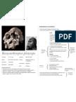 Kenyanthropus Platyops - Cheatsheet