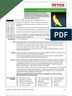 Parakeet Ringneck