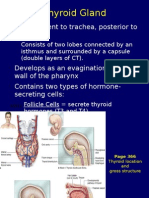 Endocrine System 2