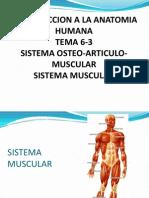 6 3 Sistema Osteoarticulo Muscular Musculo