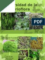 brioflora mexicana (1)