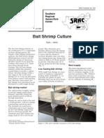 Bait Shrimp Culture