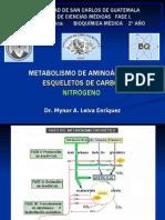 metabolismo-de-aminoacidos