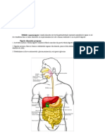 Aparatul-digestiv