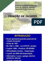 criaçãojacaré2011