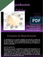 Reproduccion Celular Expo Biologia