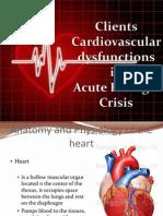 Clients Cardiovascular Dysfunctions