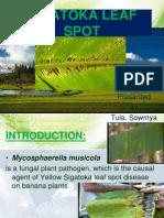 Sigatoka Leaf Spot