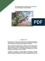 cultivo melocotoneros Guatemala
