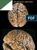 Anatomia-3-Neuro