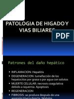 higado-vb-pan-110413003225-phpapp01