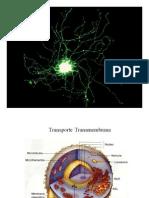 Transporte Transmembrana Modo de Compatibilidade