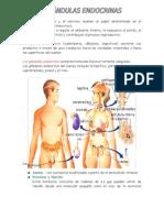 Fisiologia Hormonal
