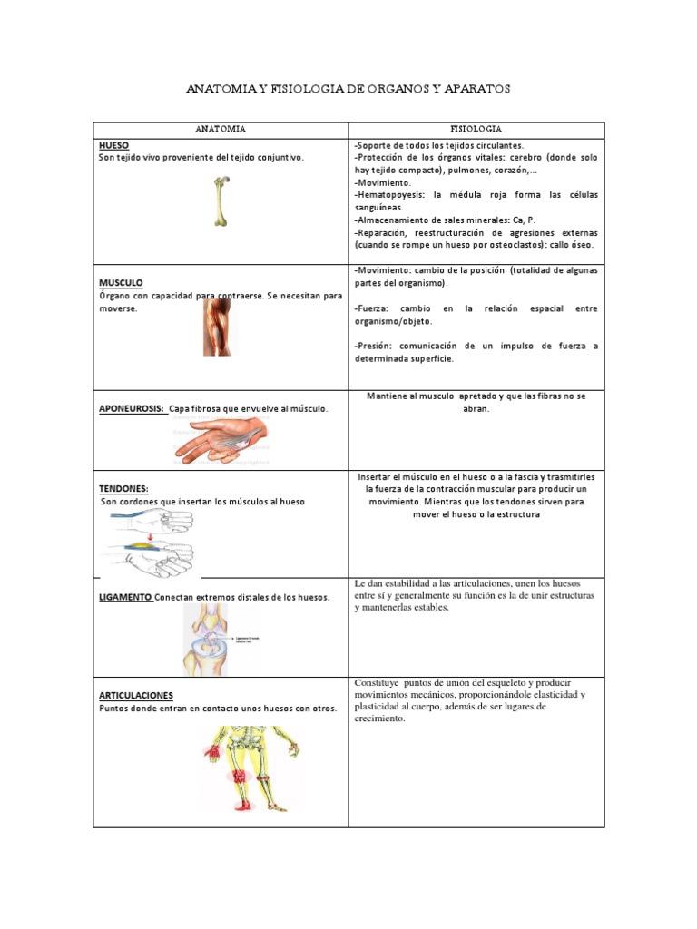 Anatomia y Fisiologia de Organos y Aparatos