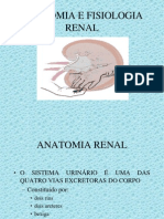 1213723174_1446.anatomia_renal