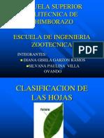 Clasificacion de Las Hojas
