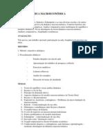 Ementa.DinamicaMacroeconomica.2011.1