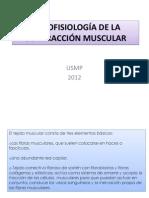 Tejido Muscular Histologia Contraccion