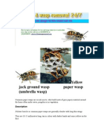 Wasp Removal Service 0423688352 Sydney