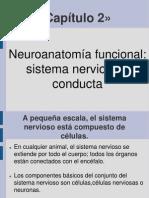 02. Psicologia Biologica. Neuroanatomia Funcional