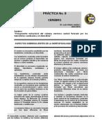 Formato Practica Hemisferios Cerebrales 2012