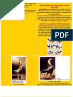 Guia de Como Tener Criadero de Gallos