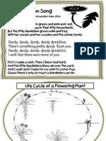 Dandelion Lessons