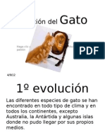 Evolución del Gato