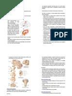 "Vista previa de ""50750282-14979235-Sindrome-Piramidal-y-Extrapiramidal.pdf"" copia"
