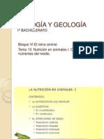BIOLOGÍA Y GEOLOGÍA Tema 13 Nutrición animal I