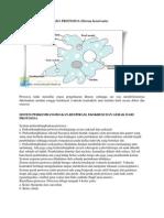 Sistem Ekskresi Pada Protozoa