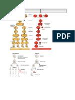 Tabel Perbedaan Spermatogenesis Dan Oogenesis