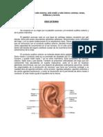 Oído, Sistema nervioso simpático y Parasimpático