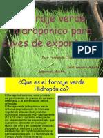 Forraje-Verde-Hidropónico-EDE