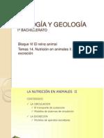 BIOLOGÍA Y GEOLOGÍA. Tema 14 Nutrición II