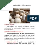 Agaricus Bisporus (Champignon)