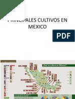 Principales Cultivos en Mexico