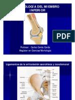 Artrologia Del Miembro Inferior [Modo de Compatibilidad]