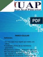 Presentación monografiA UAP