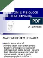 Anatomi & Fisiologi Sistem Urinaria