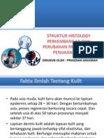 Histology Penuaan Kulit