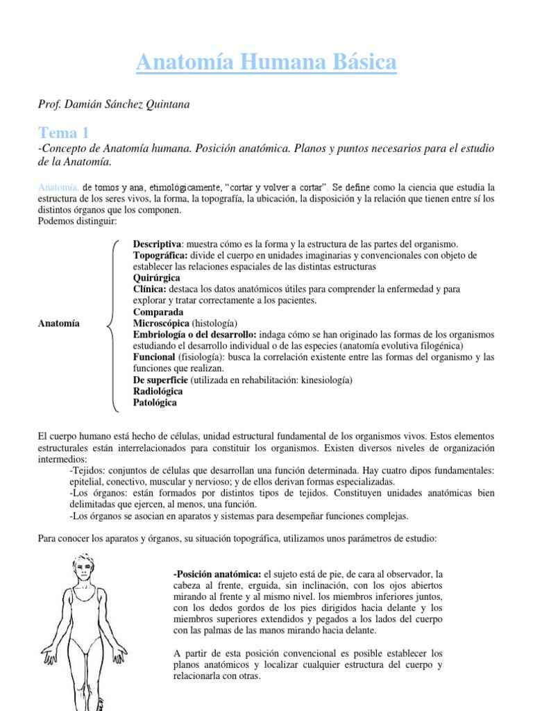 Anatomía Humana Básica2