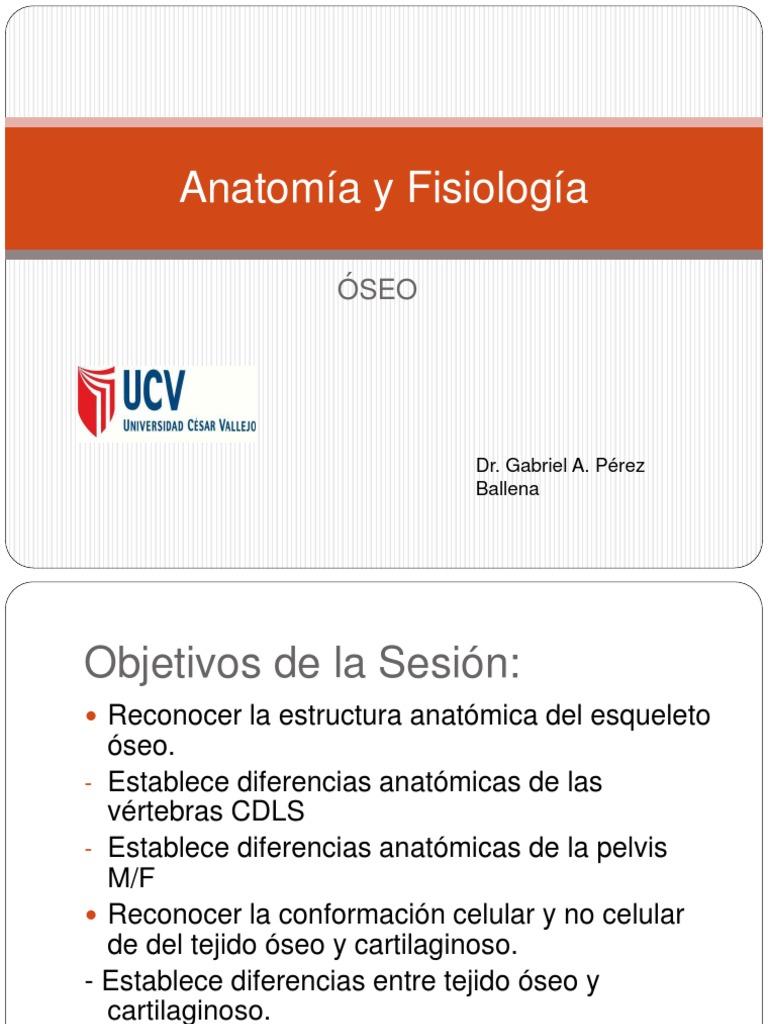 Anatomía y Fisiología Ósea
