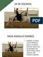 Presentacion Razas de Equinos