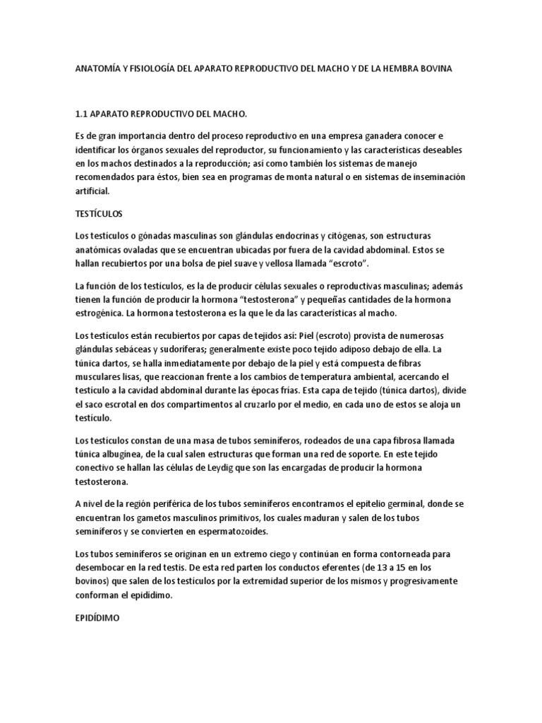 ANATOMÍA Y FISIOLOGÍA DEL APARATO REPRODUCTIVO DEL ...