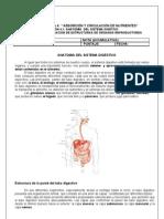 Blg Nm2 u4 g Interpretacion Aparato Digestivo