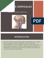 Vasos Cervicales